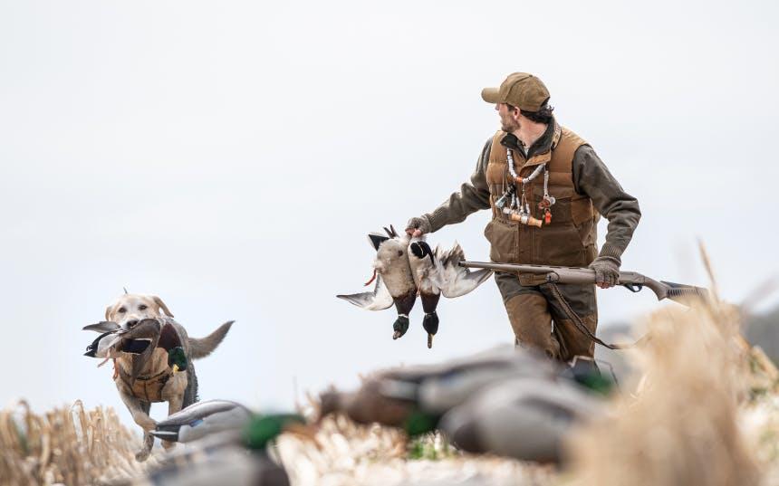ducks15