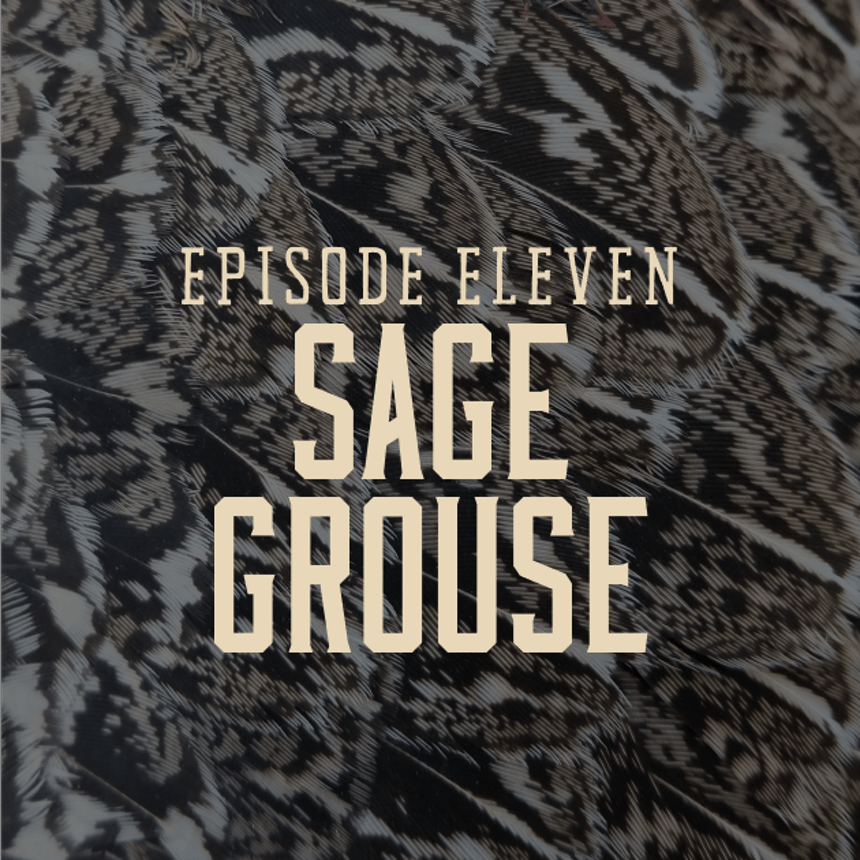 hgt-sage-grouse-cover