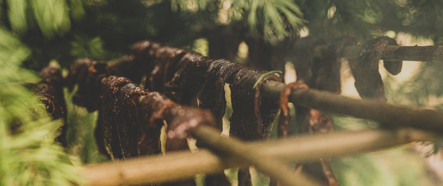 jerky meat drying on pine boughs