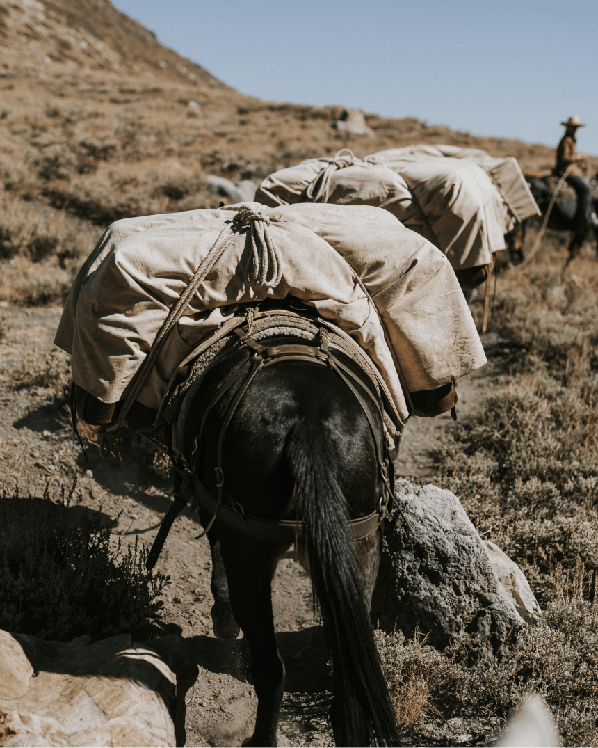 How to pack a mule & what to bring_1