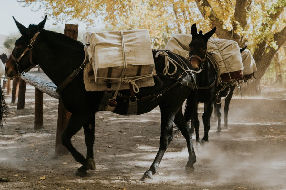 a train of pack mules leaving the pen