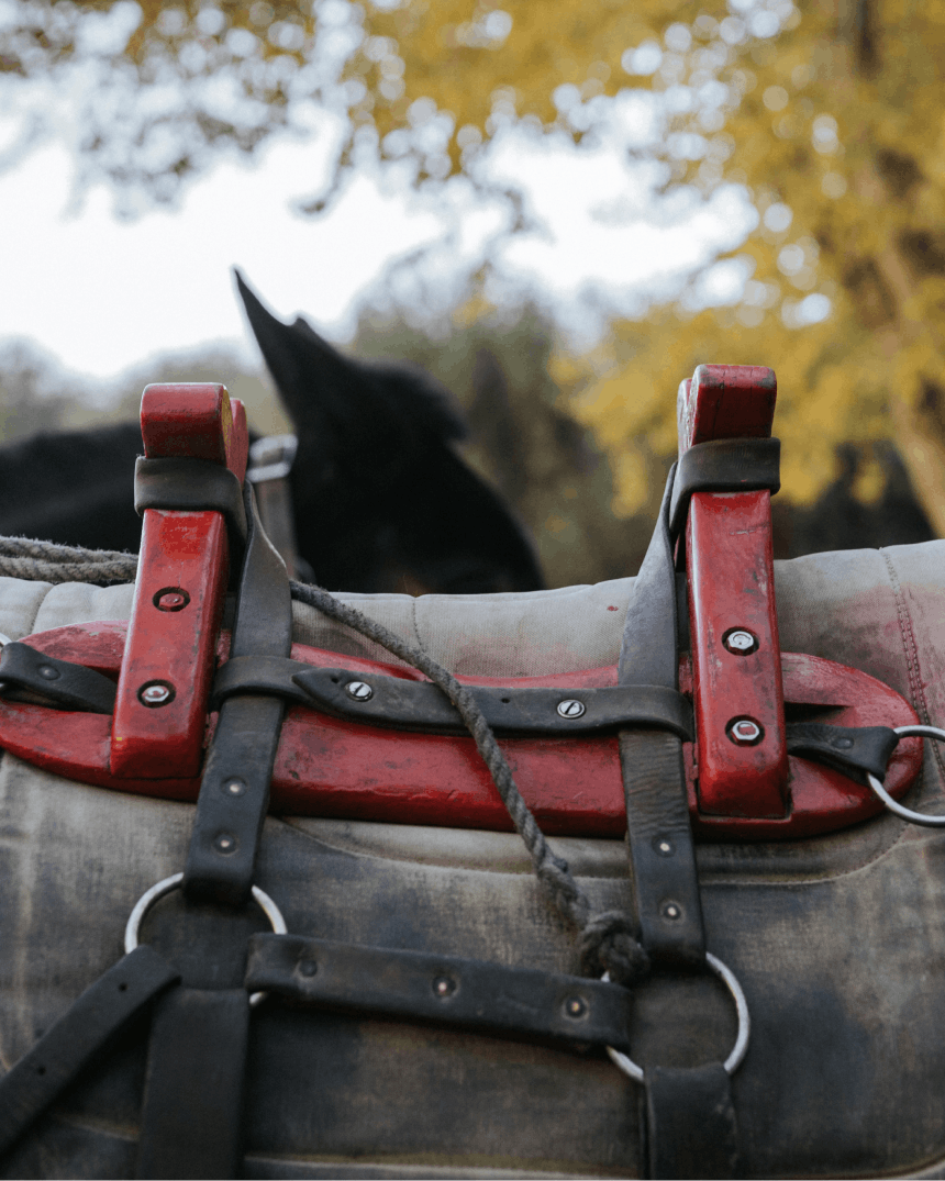 a red saddle detail