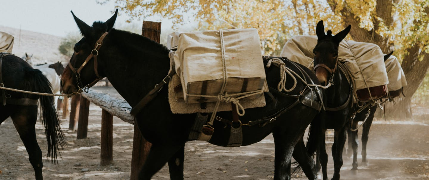 How to pack a mule & what to bring_HERO