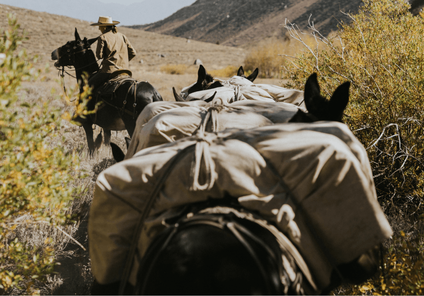 woman on a horse leading pack mules up a trail