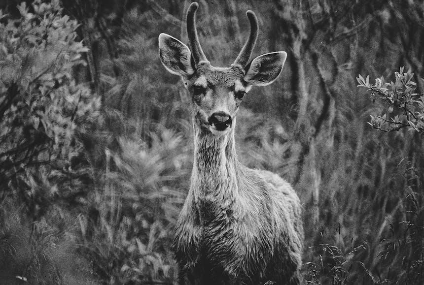 alaskas-marine-highway-kootenai-wildlife-viewing-1214e1 (1)