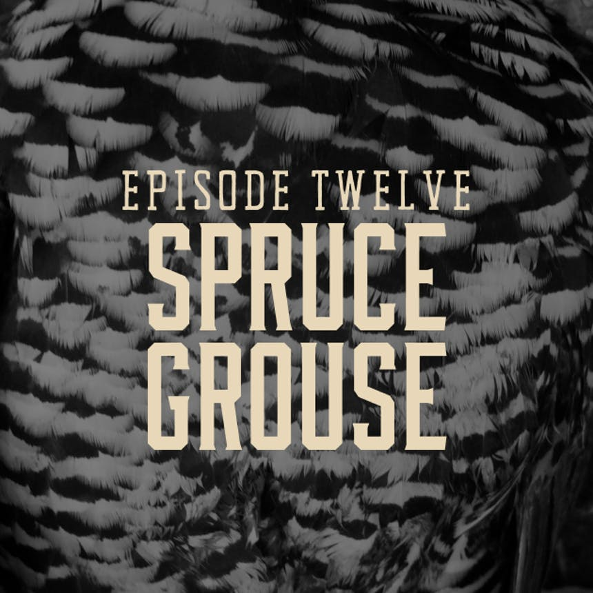 spruce-grouse-landing-page