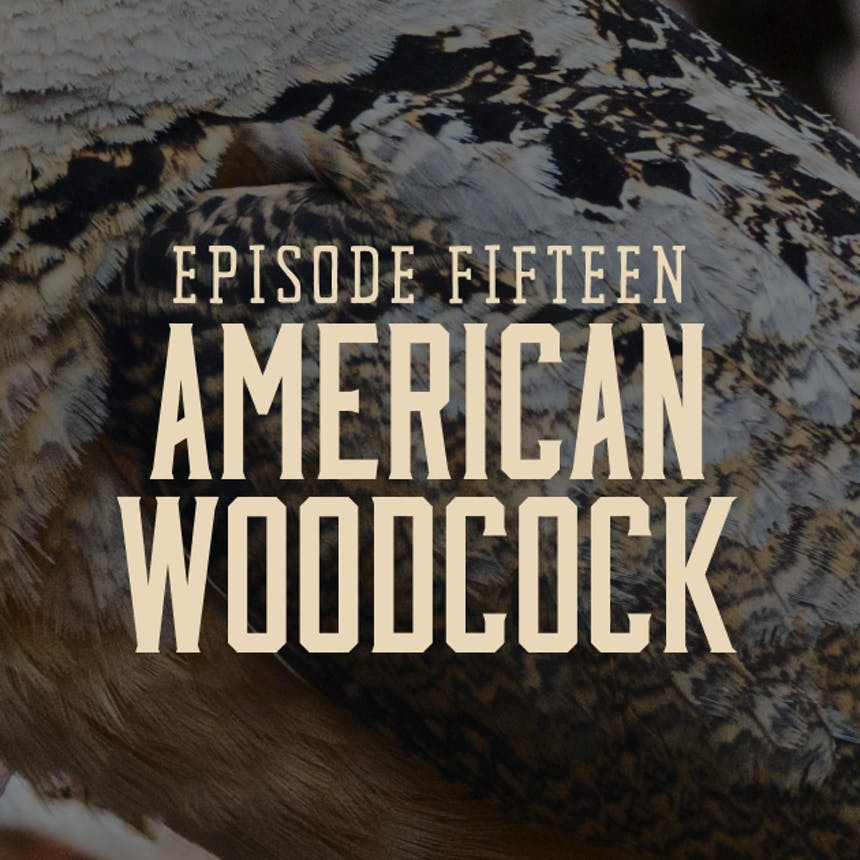 Promotional image for Hunt Gather Talk Podcast hosted by Hank Shaw Episode 15: American Woodcock