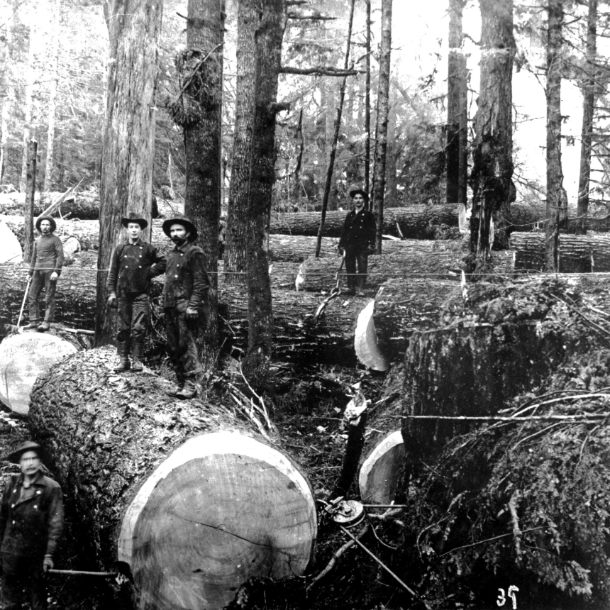 black loggers in black uniforms stand in forest with large downed logs