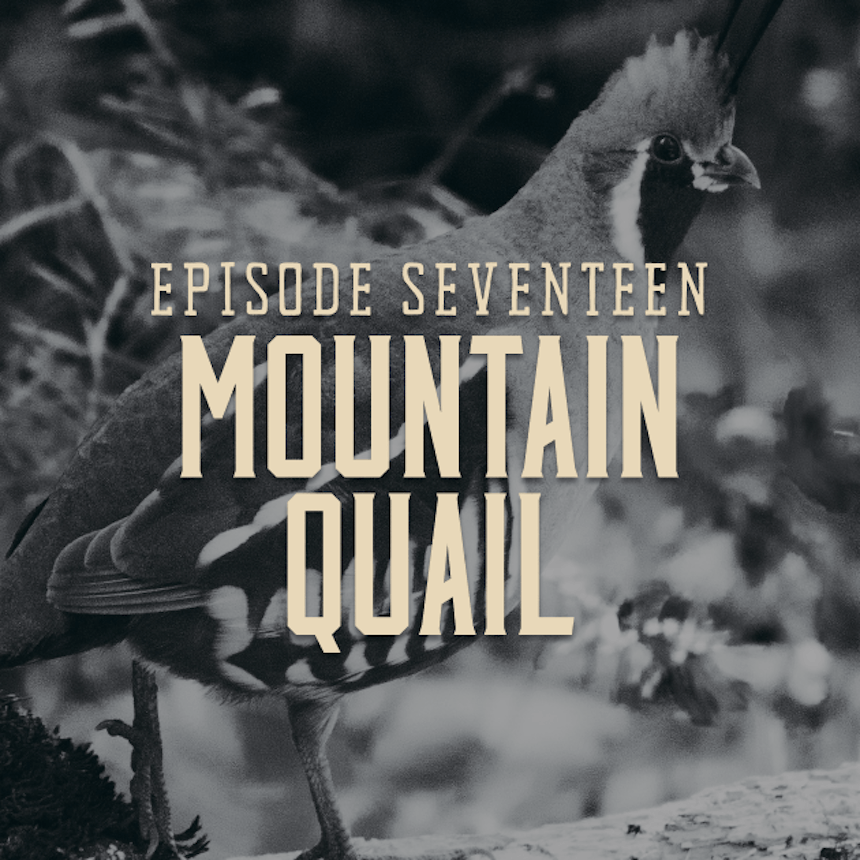 Landing Graphic for Episode Seventeen Mountain Quail, Image of Mountain Quail in Background