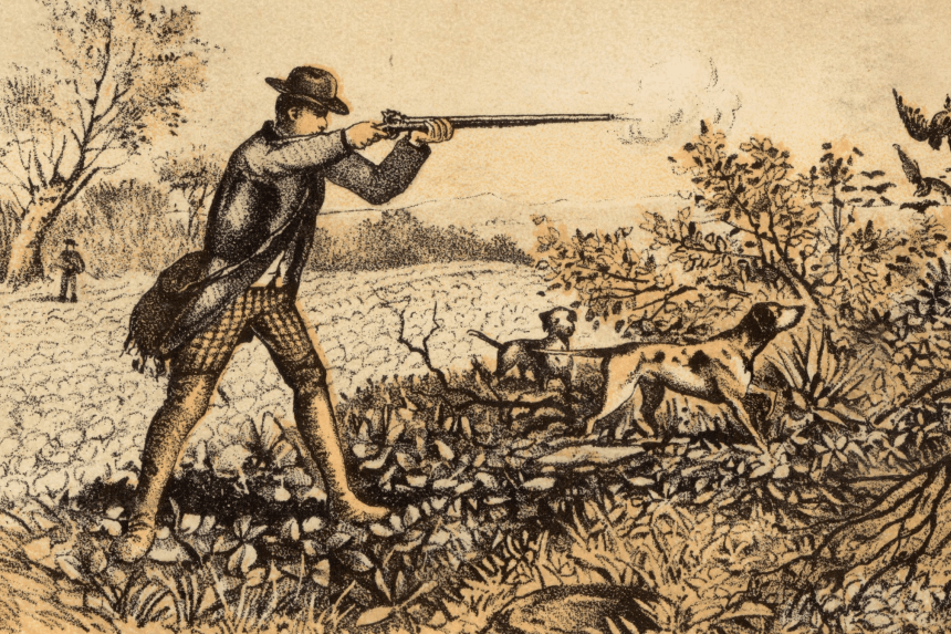vintage illustration of pheasant hunter aiming and shooting at pheasants with two hunting dogs