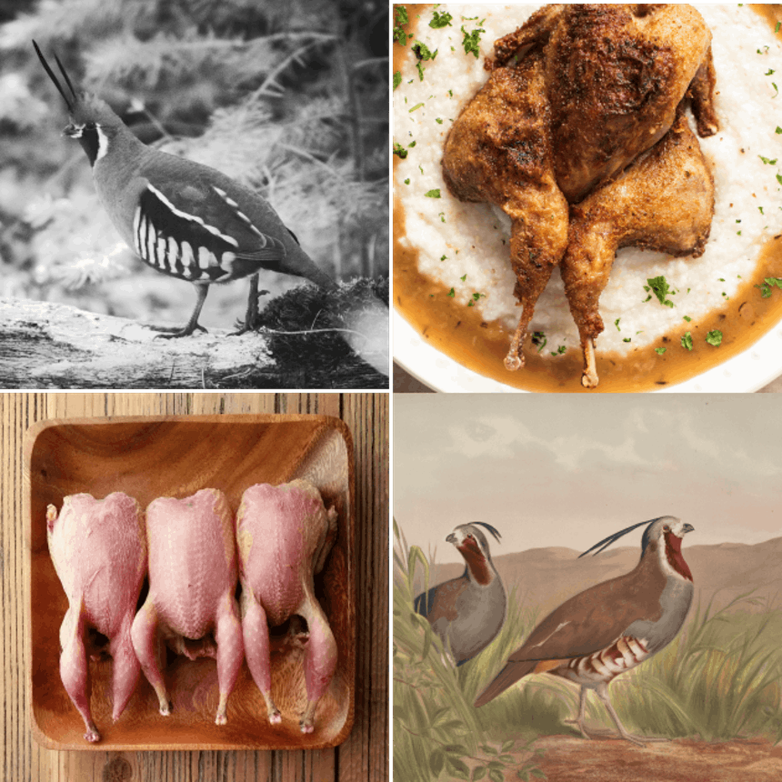 collage of four images of mountain quail living and prepped for a meal