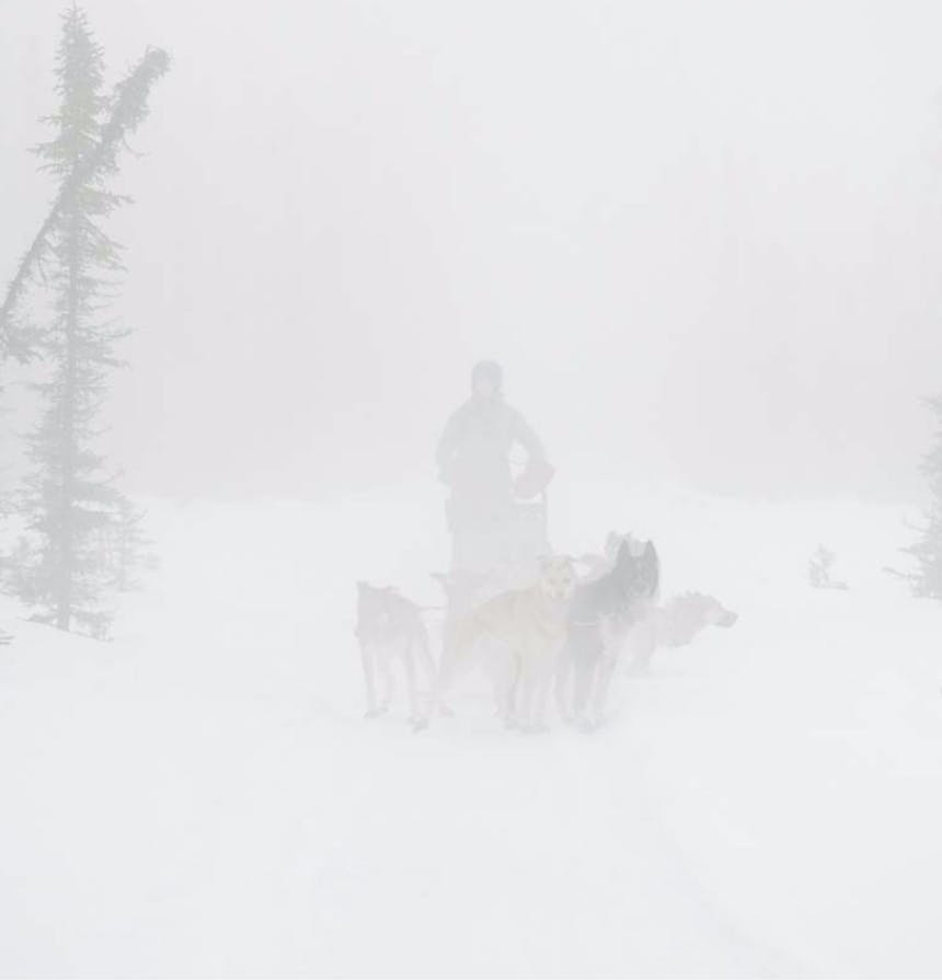 team of sled dogs running a musher's sled through a snow storm