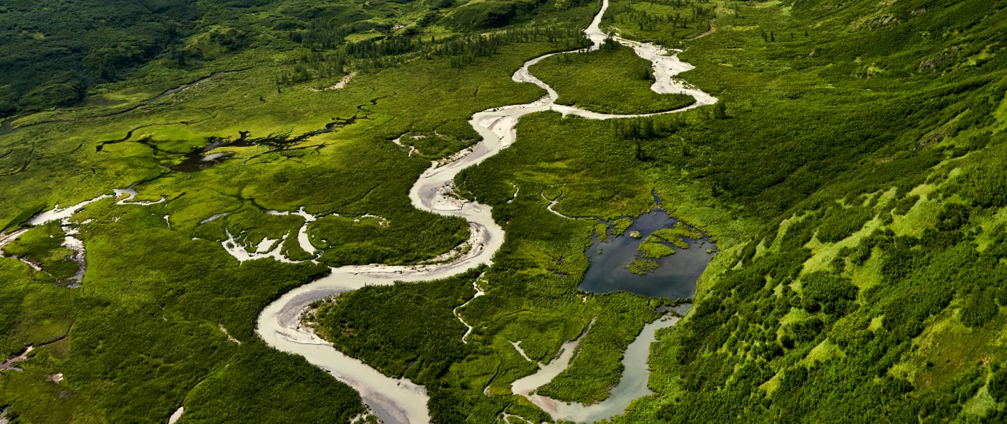 a series of rivers snakes through lush green arctic tundra
