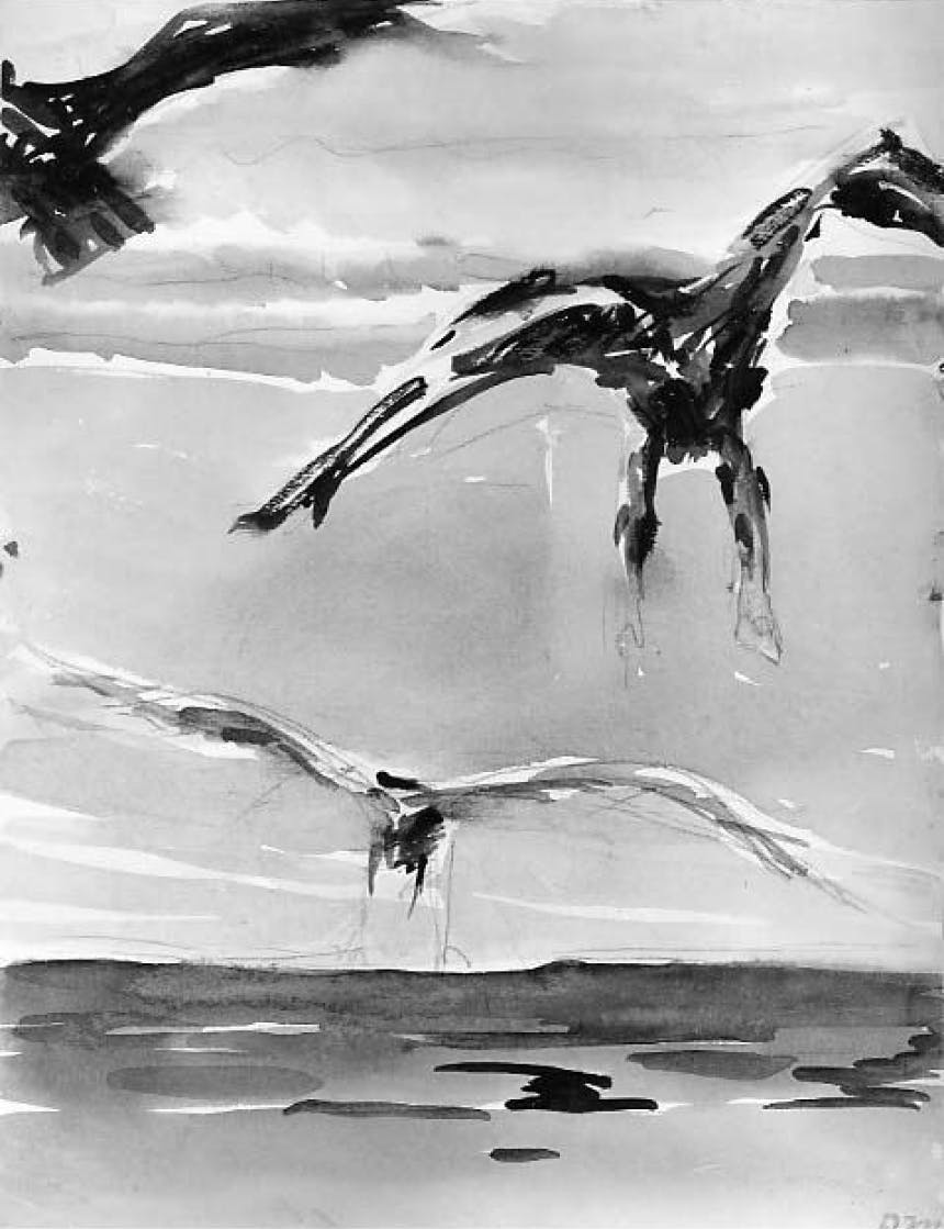 ink drawing of birds flying across the water