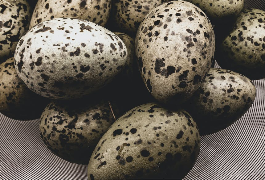 black and white spotted eggs in a bowl