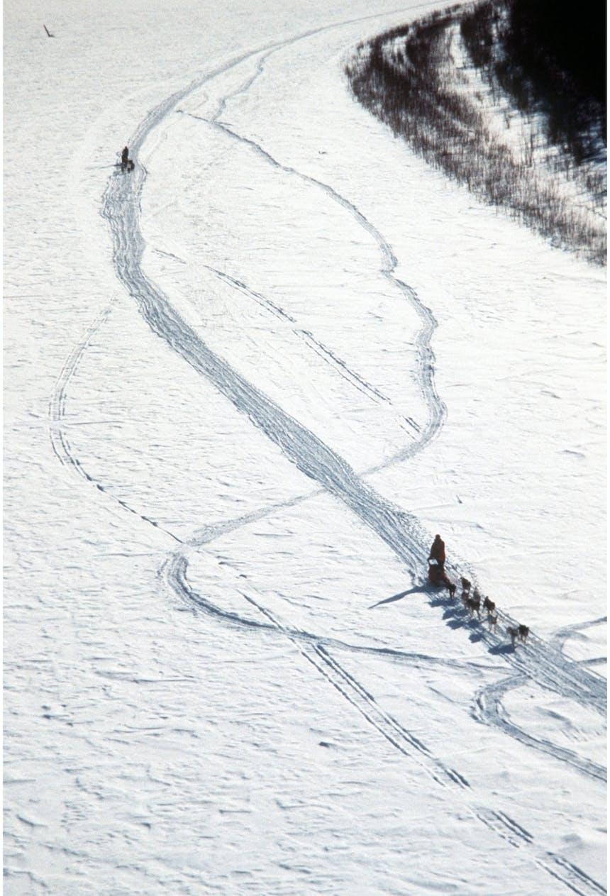 Two sled dog teams work their way along snowy tracks