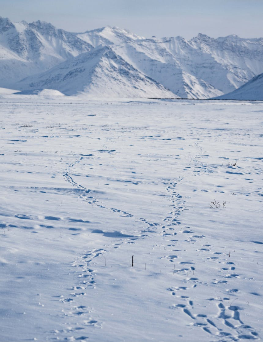 caribou tracks in a snowy mountain pass