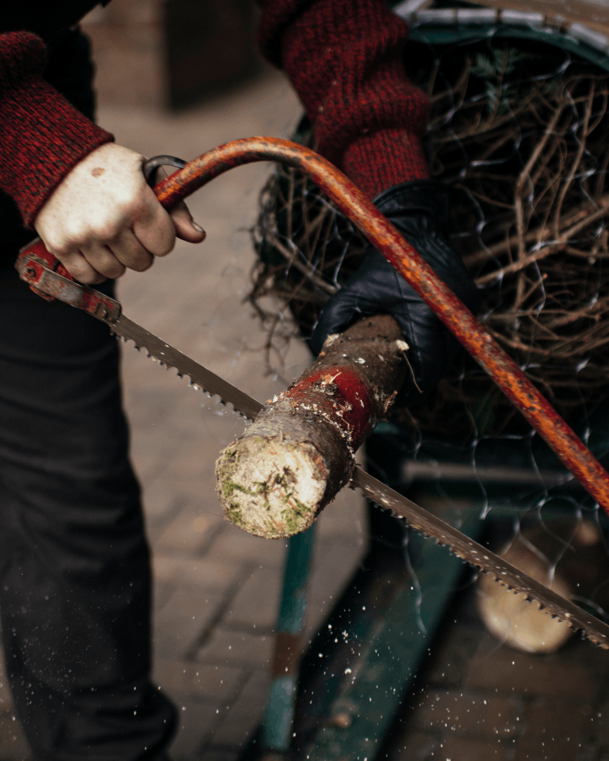 hand holding a bow saw cutting a small portion off the end of the trunk of a christmas tree
