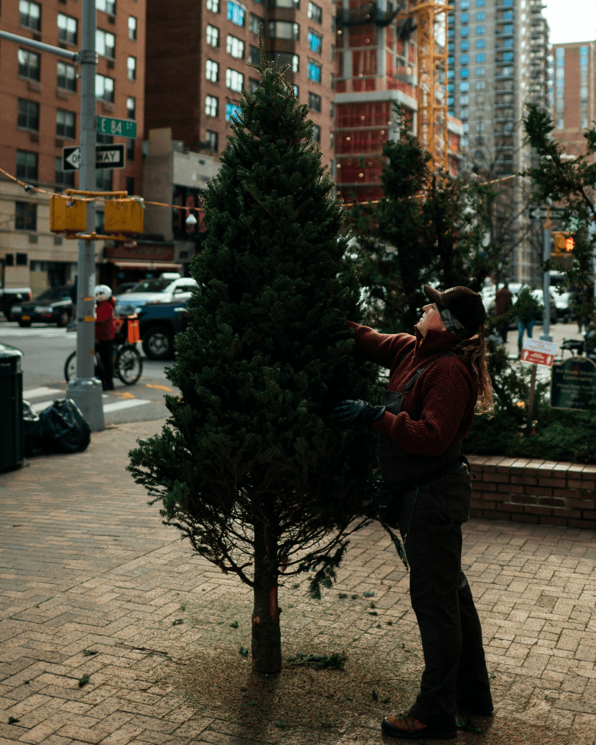 woman tending to a tree in a square in manhattan on 84th street