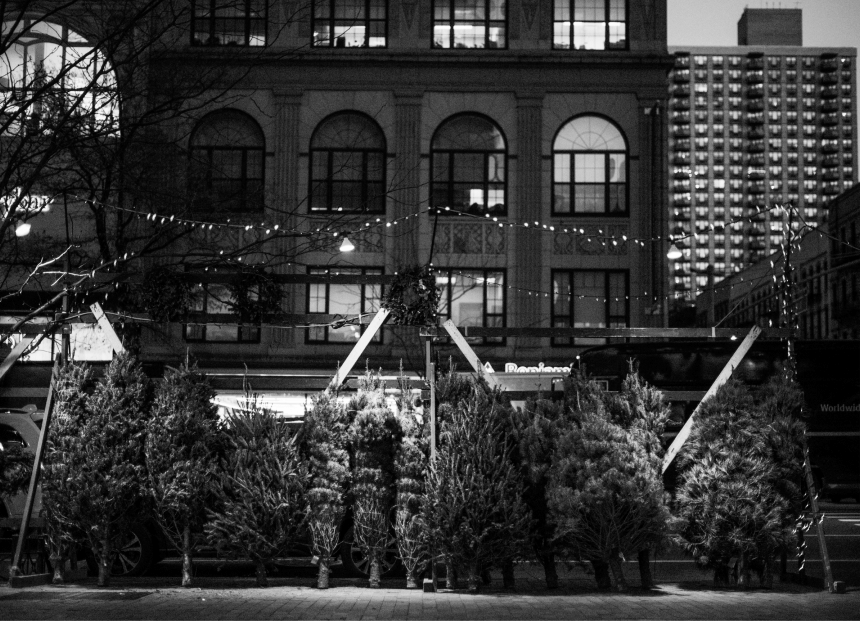 a small number of pine trees cut and bound in a lot in an outside a building in new york city