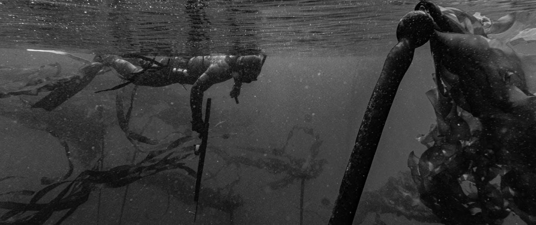 fisherman in snorkeling gear swimming with a harpoon gun amongst seaweed