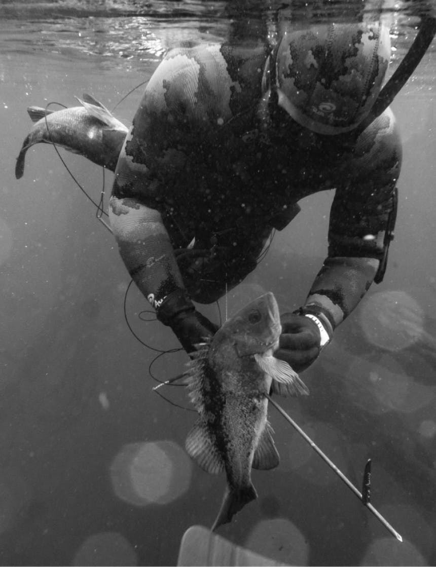 angler swimming in snorkeling gear with a rockfish stuck by a harpoon