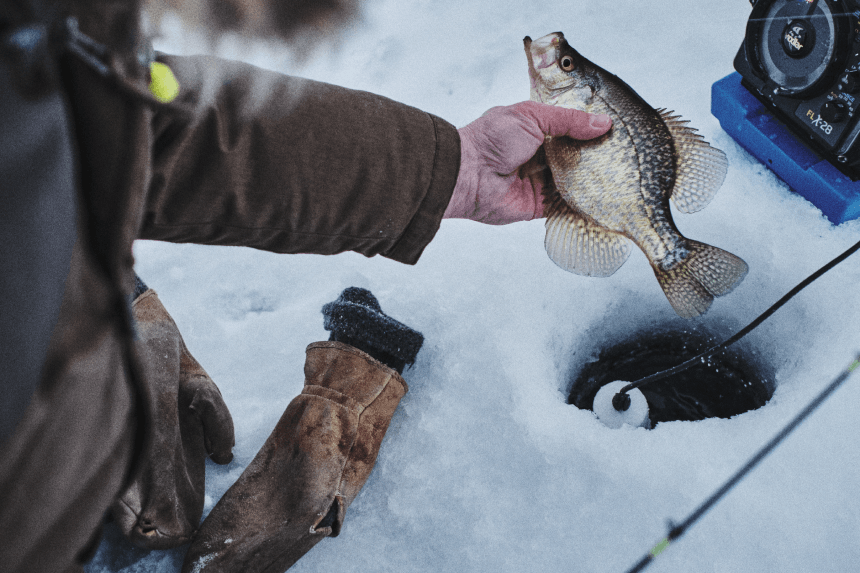hand holding a fish pulling it out of an ice hole on a lake