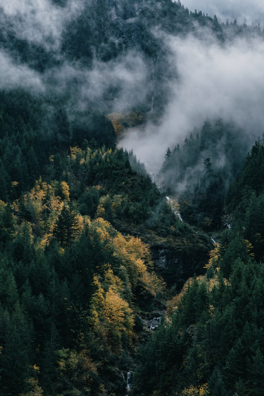 low lying clouds over a pine forest with a river running through the mountain rises