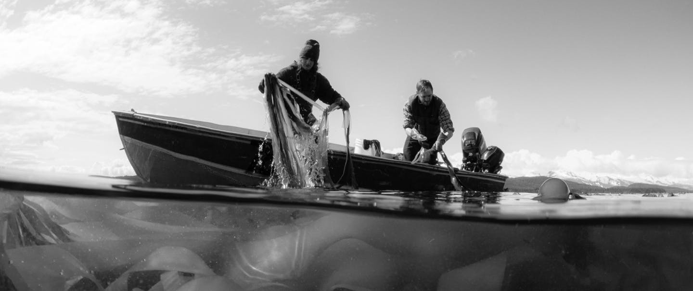 Black and white of two people harvesting bull kelp.