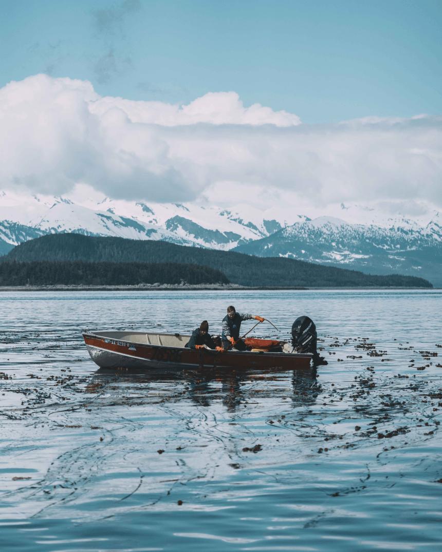 Boat in ocean harvesting bull kelp.