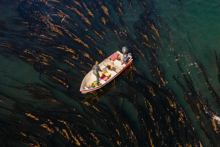 Aerial image of a mid-size boat in the middle of a dark green ocean surrounded by bull kelp.