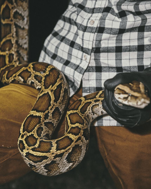 Woman holding large Burmese python wearing Filson Tin Cloth pants and flannel shirt.