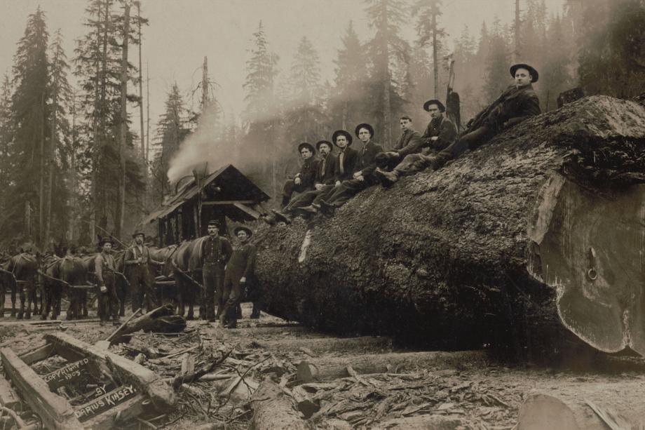 Historical logging photo.