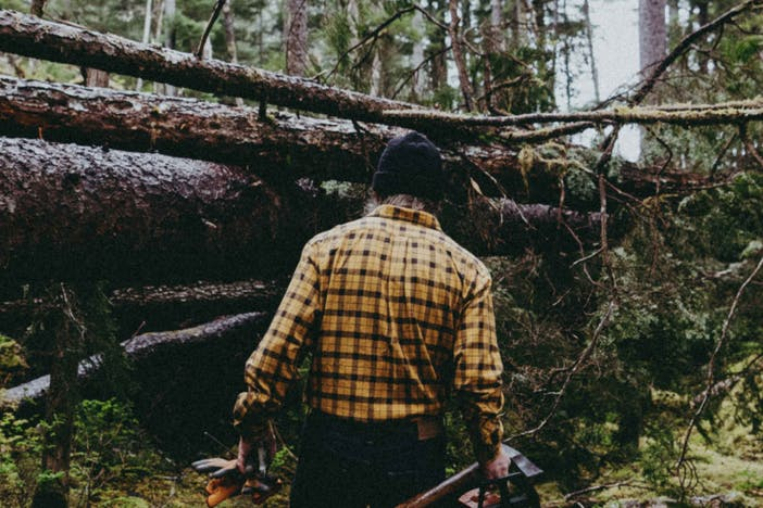 the back view of a man walking towards three downed trees in the woods wearing a yellow flannel, dark jeans and holding an axe and other materials