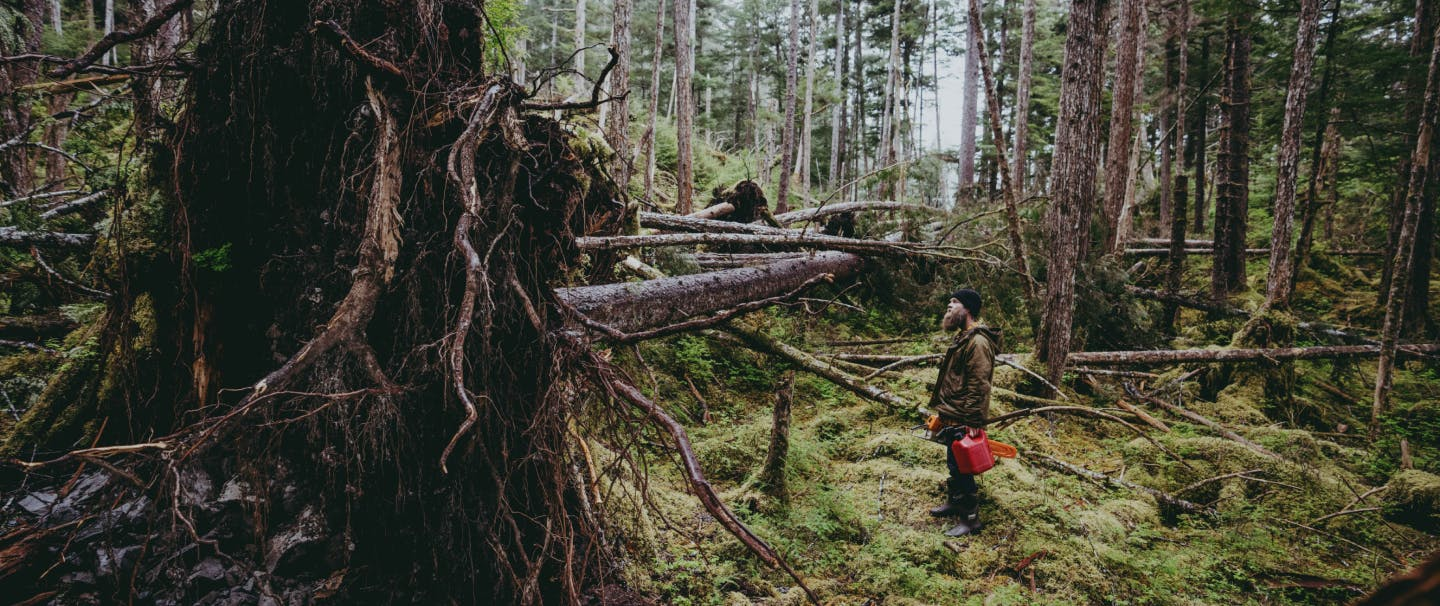 a a middle aged bearded white man wearing a brown jacket and black cap, holding a red gas can and chainsaw looking at a recently fallen tree in a thick and lush forest