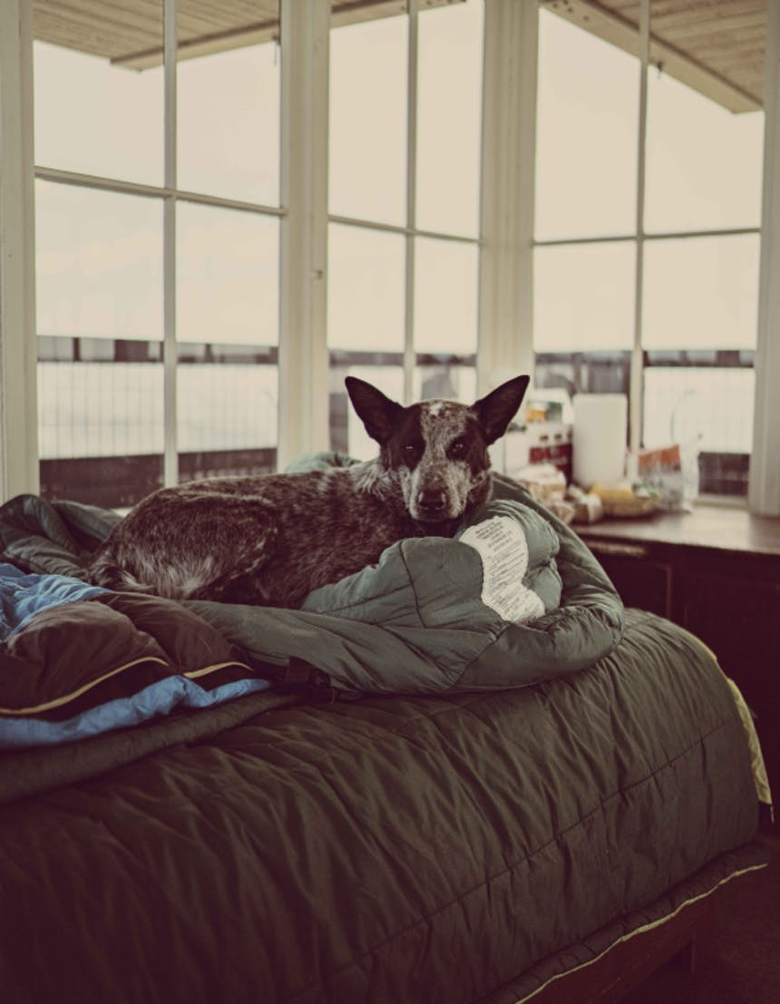 A black and grey cattle dog sitting a top the bed inside the fire lookout snuggled up among sleeping bags
