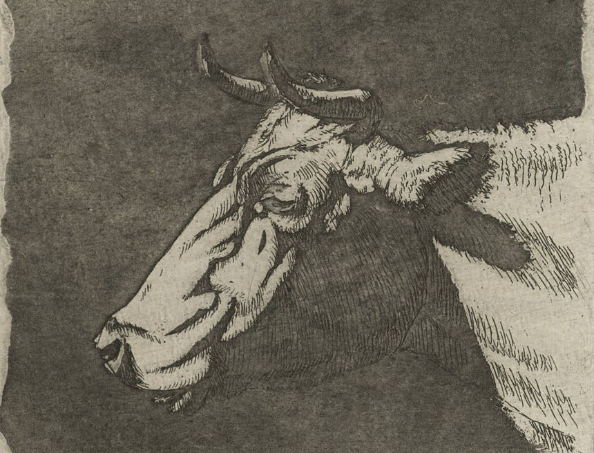 a sepia sketch of a horned cow's head profile