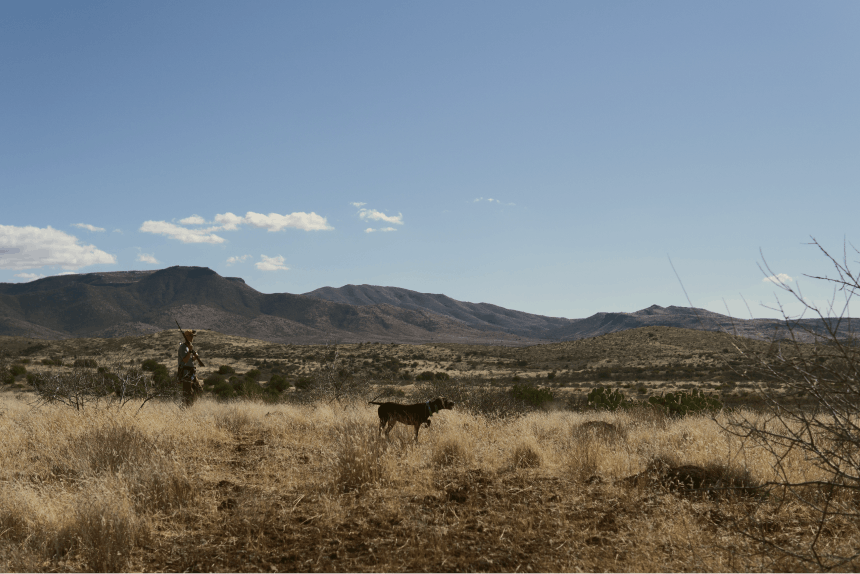 Desert upland hunting landscape