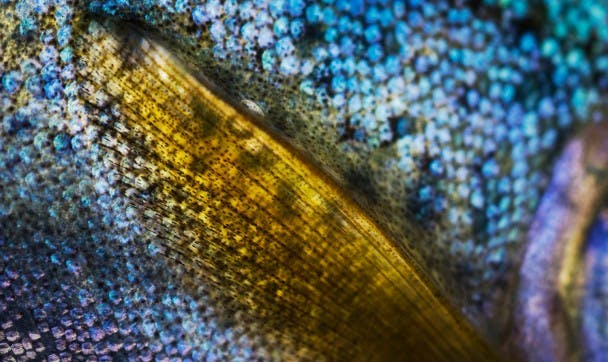 A Closer Look - Trout Photography