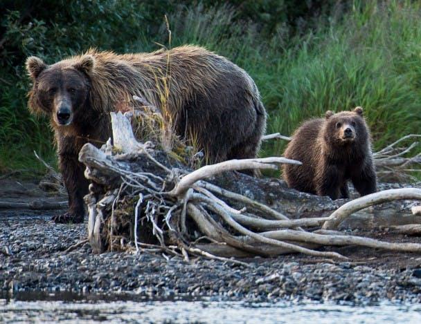 Tim Klug - Bears