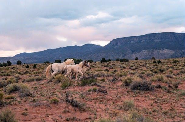Brian Merriam - Wild Horses