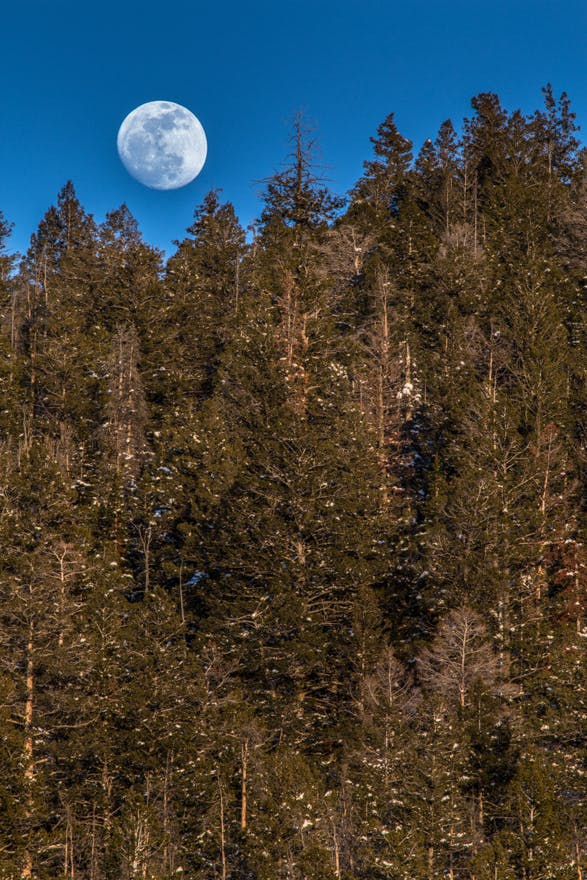 Nearly a Full Pink Moon. Rising over the White River National Forest: Summit County, Colorado.