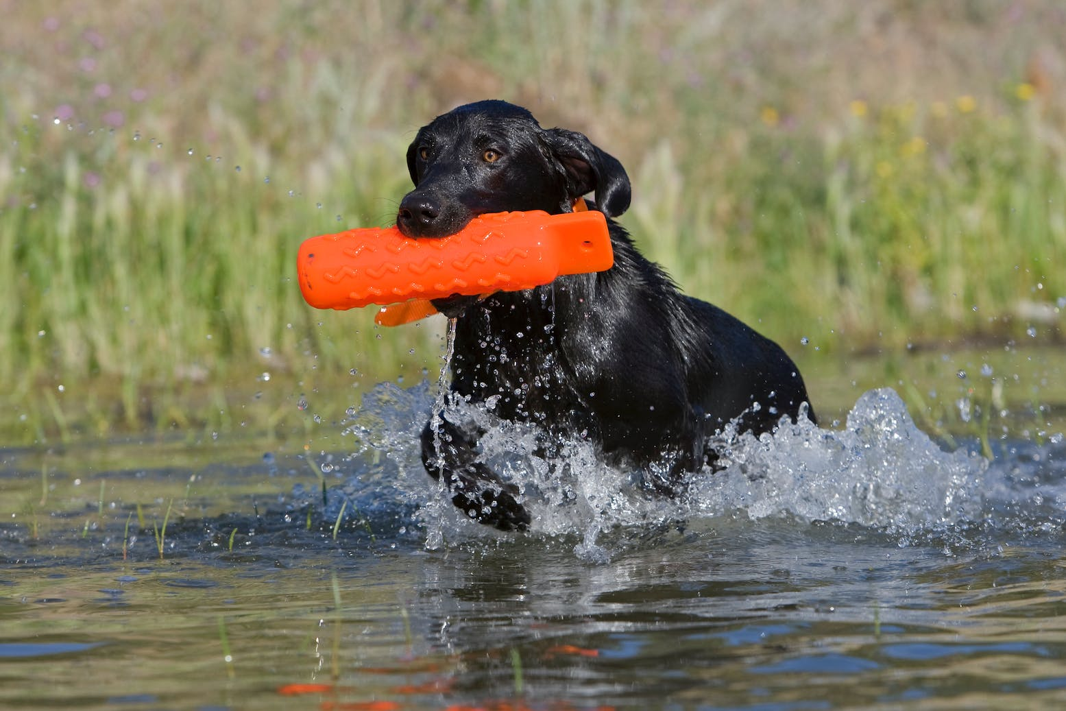 Bird Dog Training - Filson Life - 3