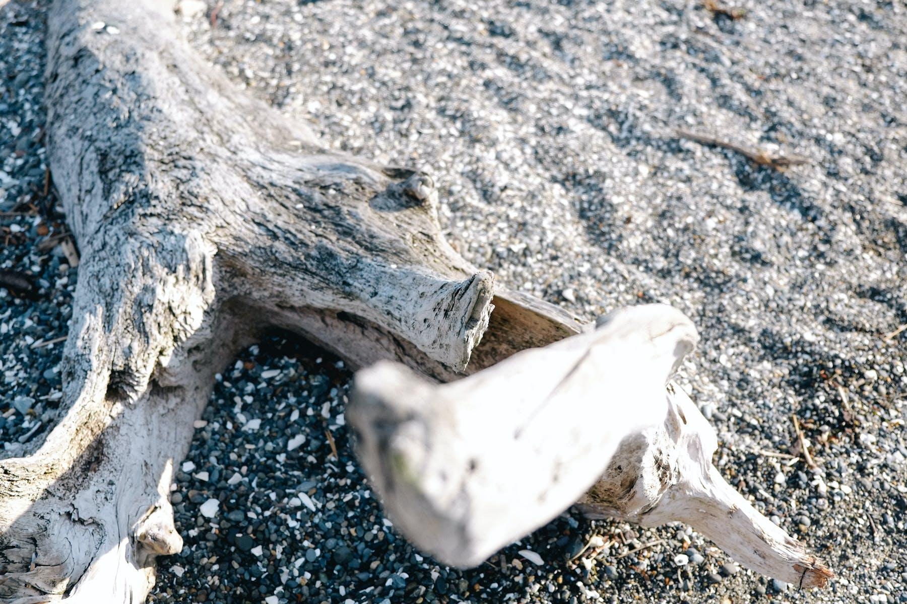 23_driftwood