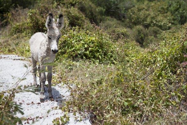 34 donkey