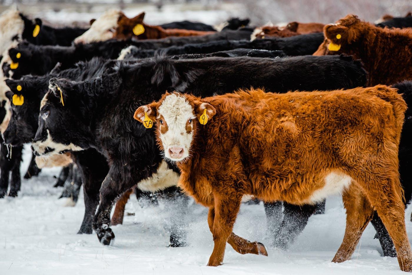 Filson Life - Wyoming Cowboy