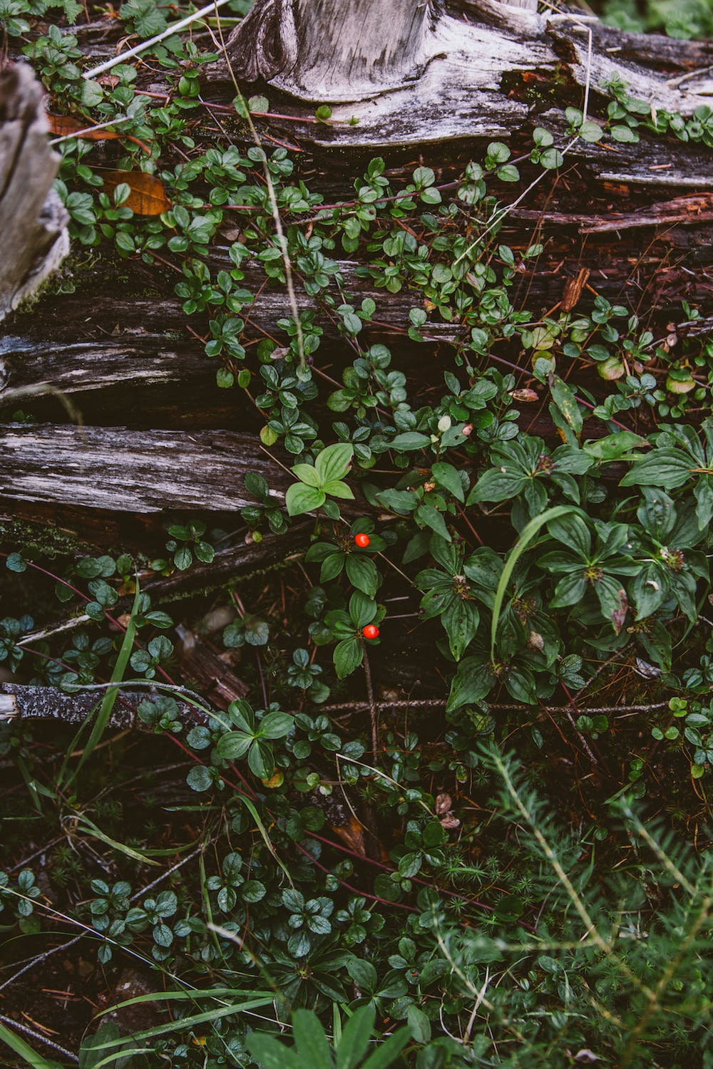 Filson Life - Wild Berries while hunting