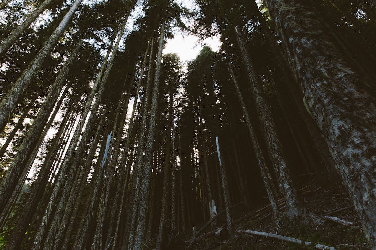Filson Life - Patrick Colleran hunting in the Olympic National Forest
