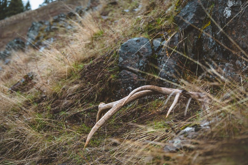 an elk antler lying on the hillside