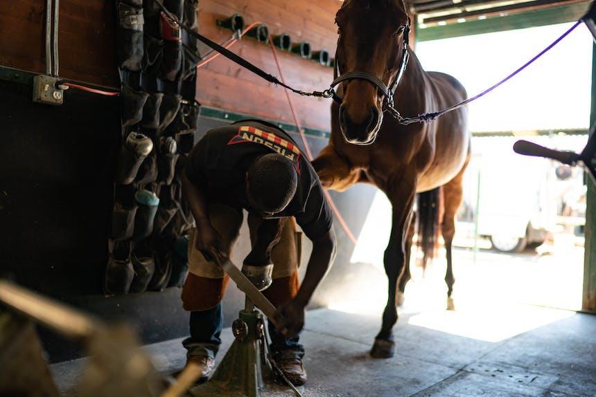 man working on horses hoof
